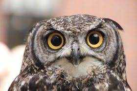 インバウンド人気体験・ツアー1位「アキバフクロウ」の人気の理由・インバウンド対策とは
