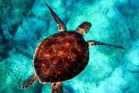 インバウンド人気体験・ツアー13位「Aloha Divers Okinawa」の人気の理由・インバウンド対策とは