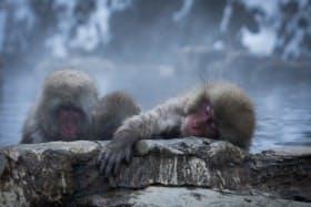 インバウンド人気観光スポットランキング19位「地獄谷野猿公苑」の人気の理由・インバウンド対策とは