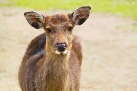 インバウンド人気観光スポットランキング21位「奈良公園」の人気の理由・インバウンド対策とは