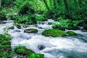 インバウンド人気観光スポットランキング29位「奥入瀬渓流」の人気の理由・インバウンド対策とは