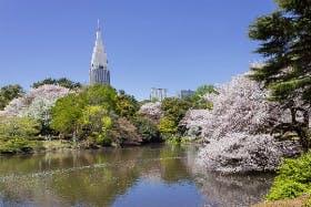 インバウンド人気観光スポットランキング6位「新宿御苑」の人気の理由・インバウンド対策とは