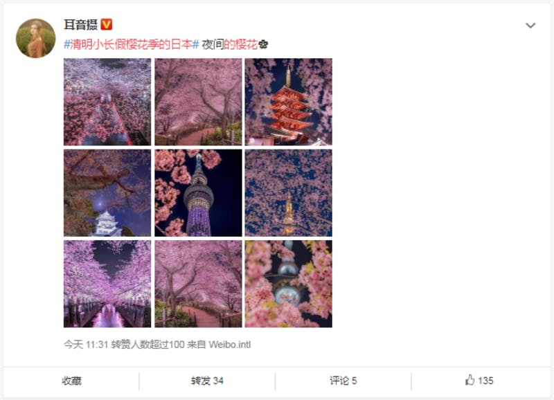 ▲日本らしい夜桜の光景