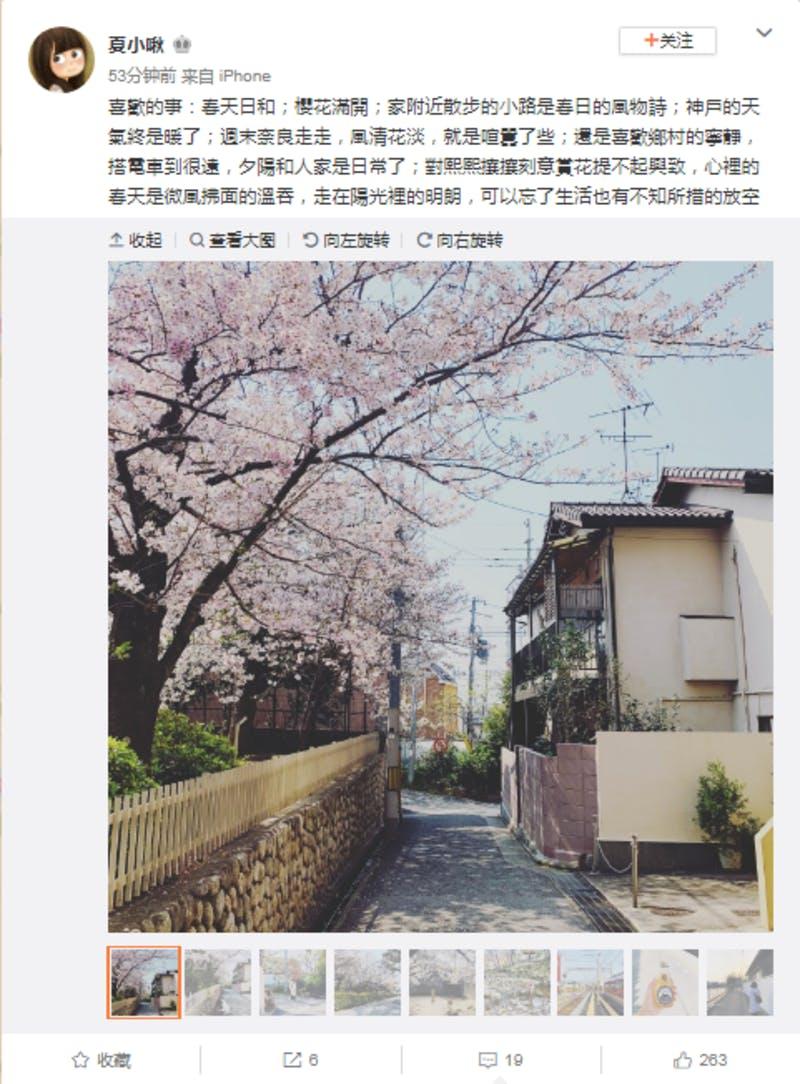 ▲何気ない路地に豪勢に咲く桜