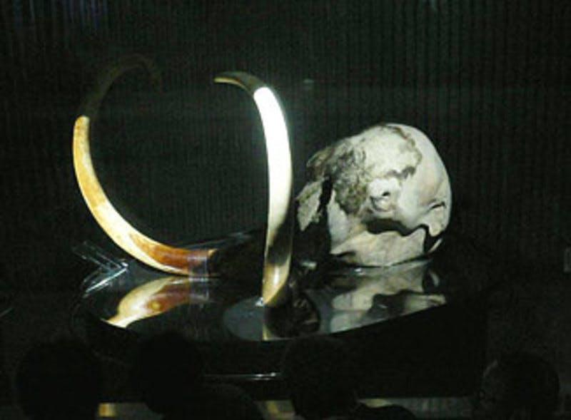 ▲[マンモスラボに展示されている「ユカギルマンモス」]:愛・地球博
