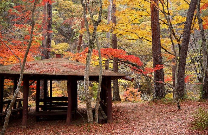 ▲昇仙峡の紅葉:昇仙峡公式サイト