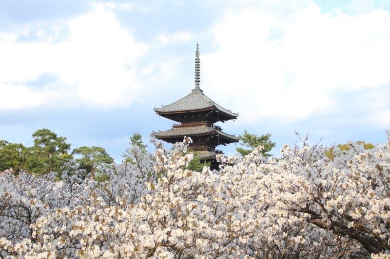 ▲訪日客も多く訪れる仁和寺の五重塔