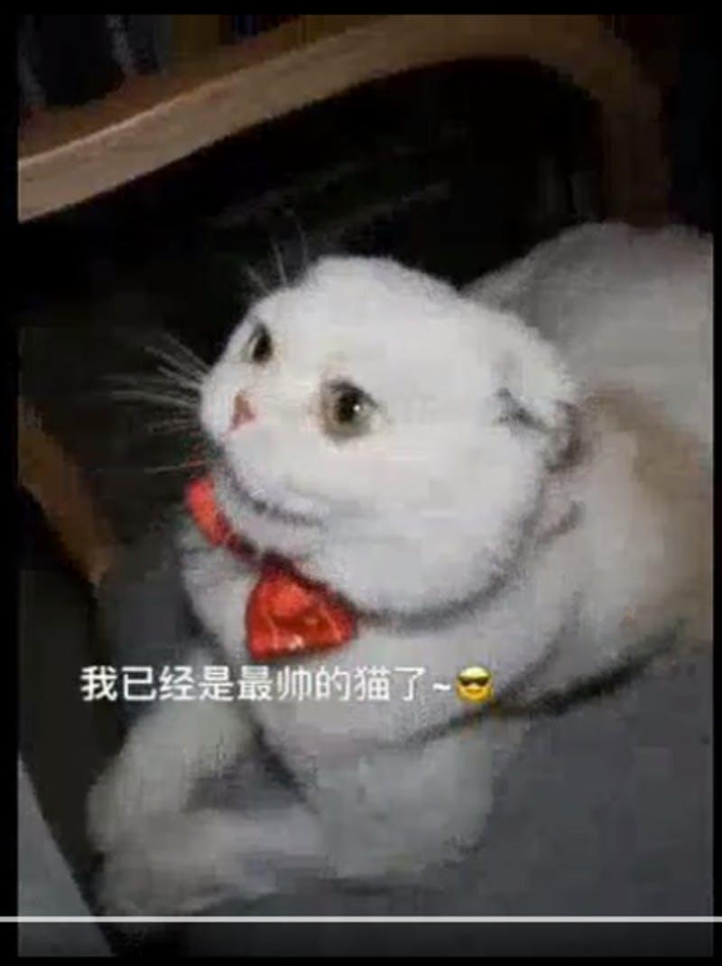 ▲「❤会说话的刘二豆❤」のコンテンツの1シーン