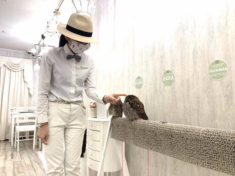▲[フクロウに触れる時は人差し指をゆっくりと近づけ、優しく触ります。]:訪日ラボ編集部撮影