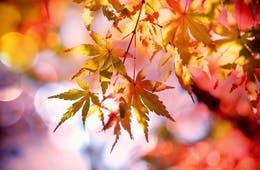 「日本の紅葉が世界で一番美しい」と言われるワケ/外国人も紅葉がお好き?人気はやっぱり京都の東福寺・永観堂